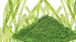 alga 2
